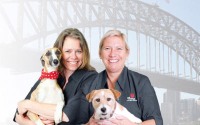Pet Medical Opens new Practice in Milsons Point