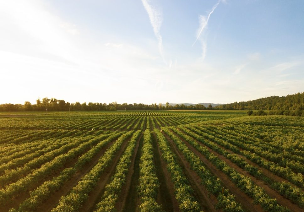Growing Demands for Sustainable Farming