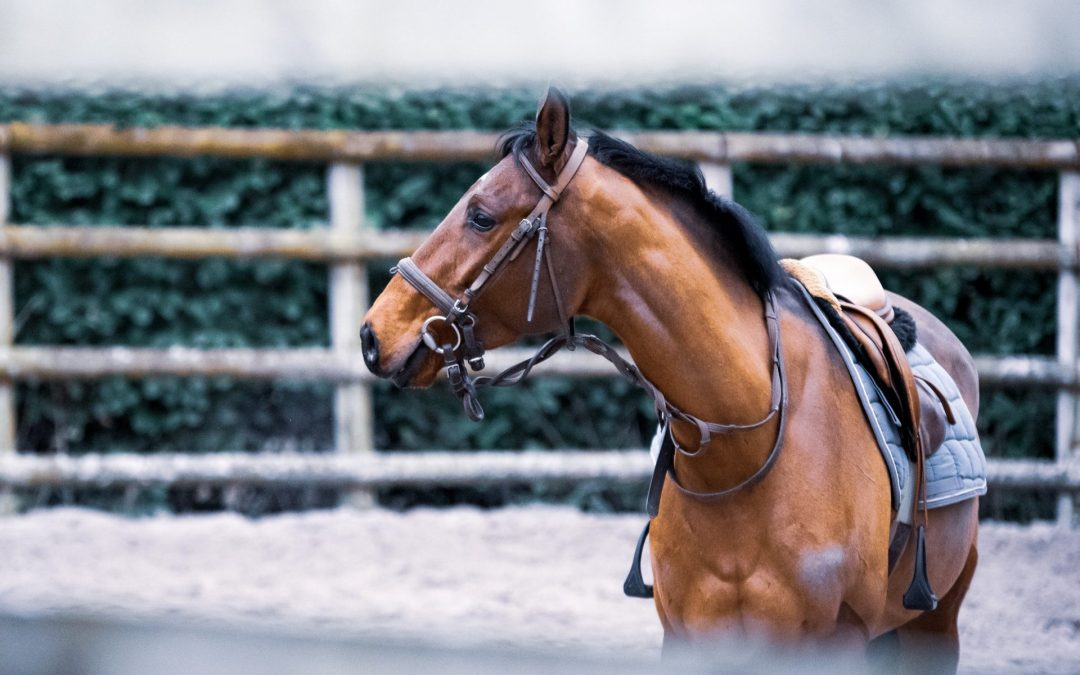 Court Finds Phone Use Whilst Horse Riding Unlawful