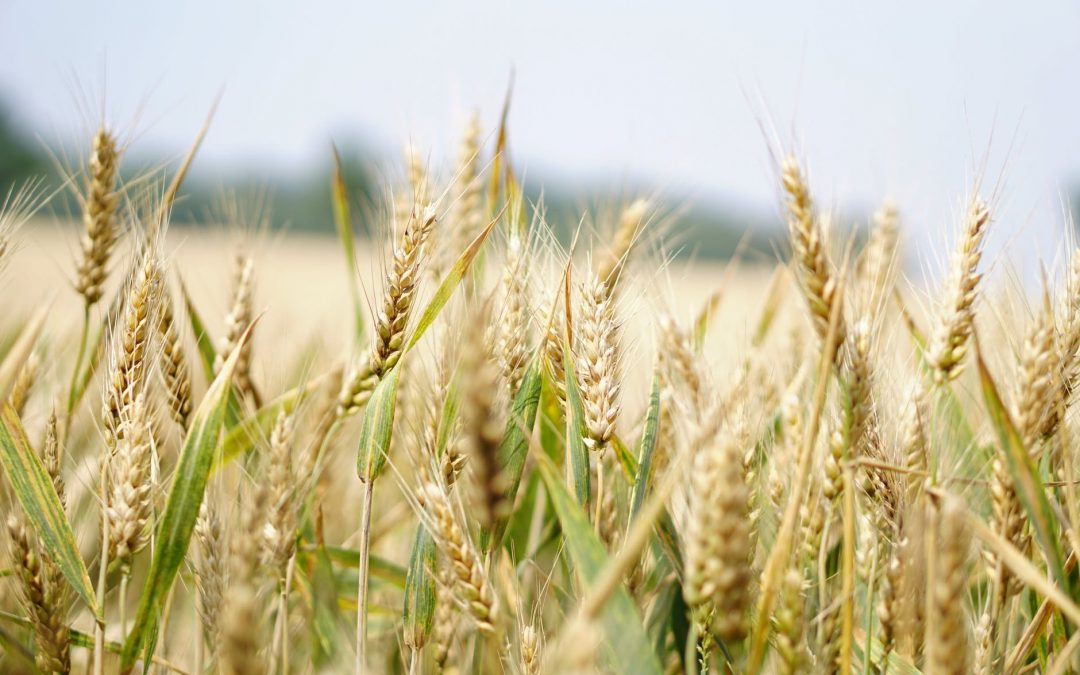 Optimism for Agriculture Industry