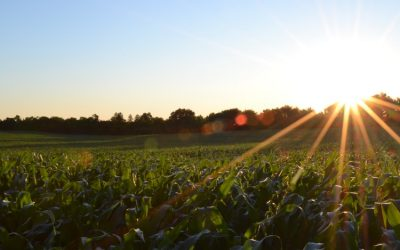 Agricultural Land Emerging Unscathed through the Pandemic