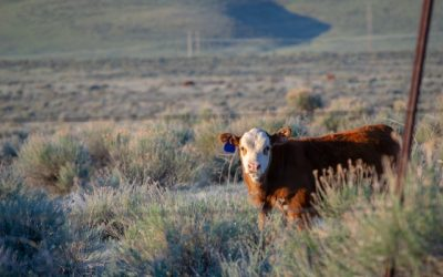 Federal Court Rules on Long-Standing Cattle Genetics Patent Dispute