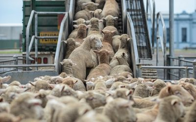 2030 Vision for the Wool Industry